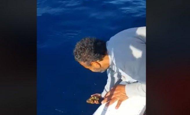 Nesli tükenme tehlikesi altındaki balıkları denize bıraktı, milyonlar izledi!