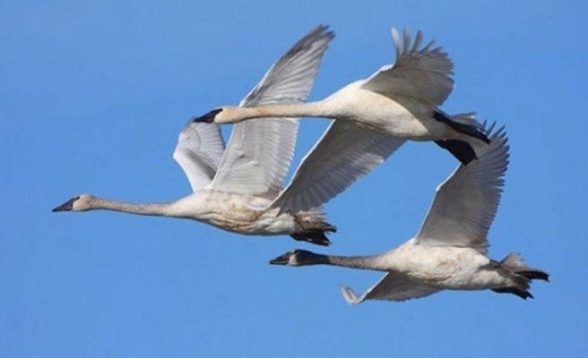 Yeşil Barış Hareketi: Kuşlar bizi birbirimize bağlar